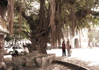 Famous Banyan Tree in Horniman Circle